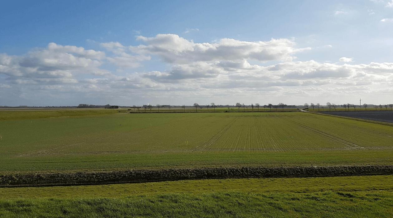 Paysage aux Pays Bas, herbe et ciel légèrement nuageux