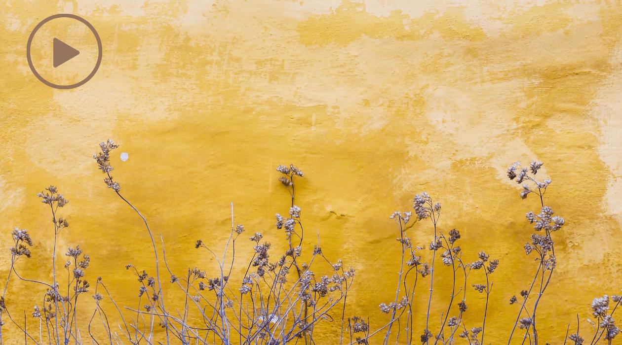 Comment être plus heureu(x)se? Fleurs sauvages, fond en peinture jaune