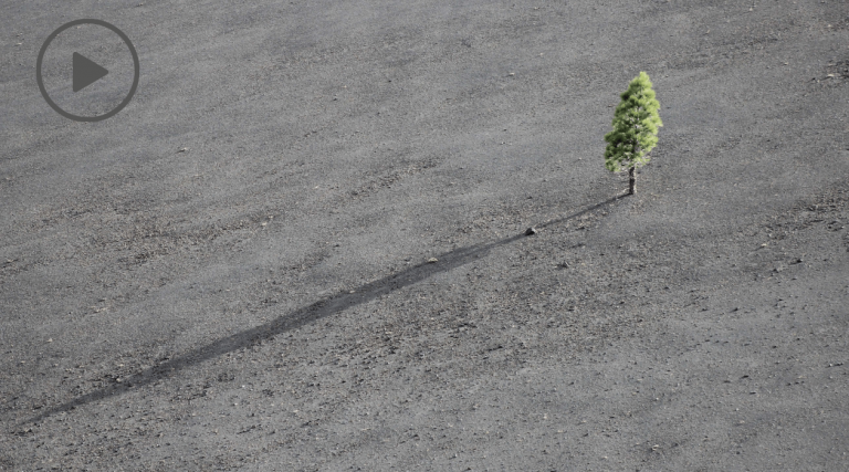How to Thrive Through Loss, Grief and Uncertainty. Image of Tree growing on bare land.
